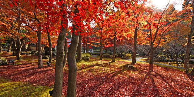 しょうざんリゾート京都 紅葉の庭園